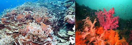 Магические свойства кораллов