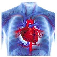 Болезни сердца. Причины, симптомы и лечение