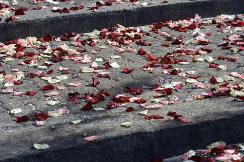 В лепестках увядших роз