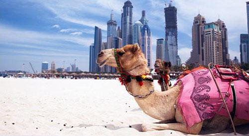 дыхание пустыни на курортах ОАЭ